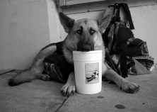dog_11-20-03
