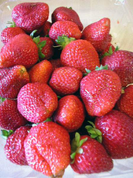 strawberries_7-10-04