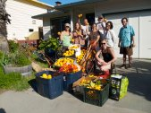 Santa Cruz Fruit Tree Project