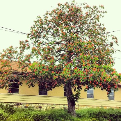 Red Horse Chestnut at 407 Broadway