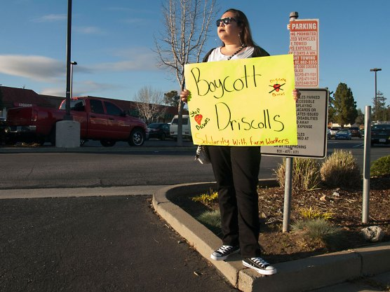 Boycott Driscoll's: Solidarity with Farmworkers