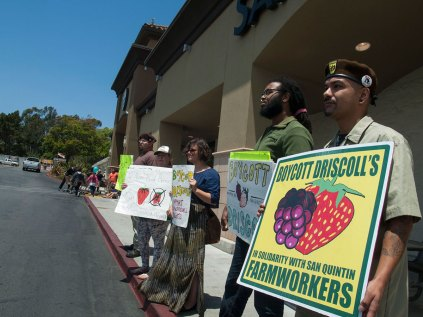 Holding Boycott Driscoll's Signs in Front of Safeway in Watsonville