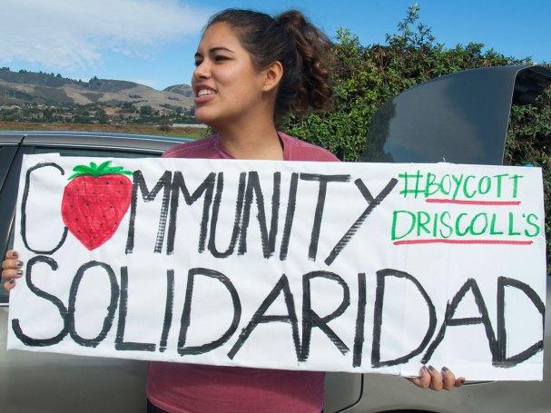 Community Solidaridad #BoycottDriscolls