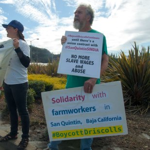 #BoycottDriscollsContinues Until There's A Union Contract with #SanQuintínSINDJA. No More Slave Wages and Abuse