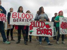 Boycott Driscoll's: Stop Blood Berries