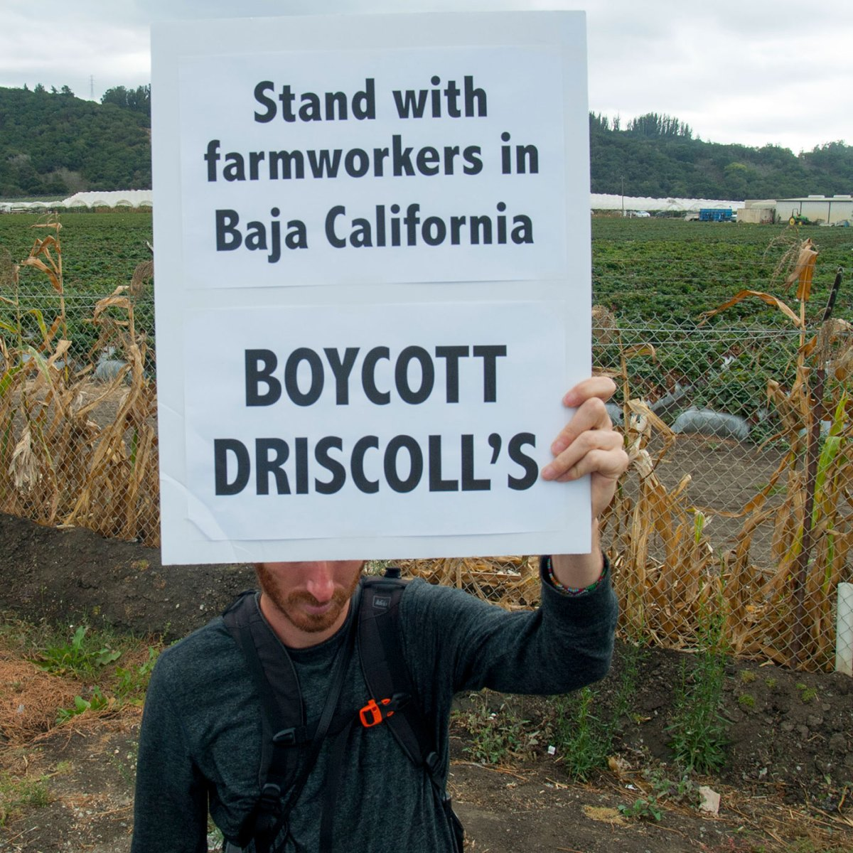 "A demonstrator holds a sign stating, ""Stand with farmworkers in Baja California. Boycott Driscoll's"" in front of the Driscoll's Distribution Center in Aromas, California on October 15, 2016."