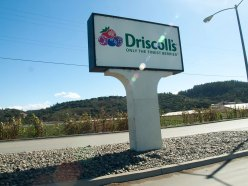 Driscoll's Sign along San Juan Road in Aromas, Califronia