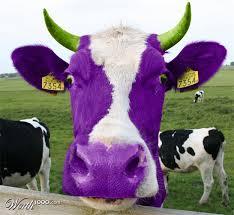 purple cow seth godin