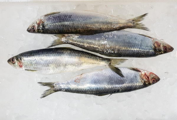 Traditional Fish