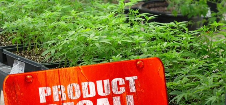 Canadian Licensed Producer Cannabis Recalls – Sign of a System Working?