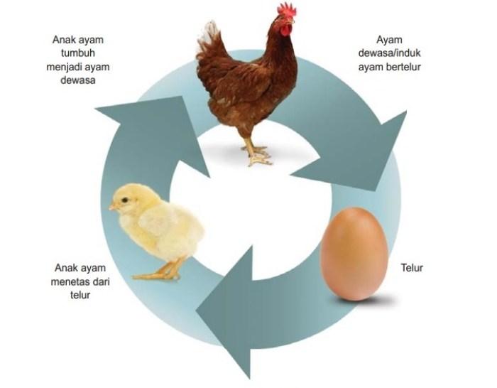 Jenis Daur Hidup Ayam