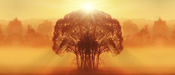 Notre conscience, notre âme est toujours une et unifiée