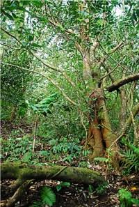 Vegetation in Mt Hibok-hibok is thick!
