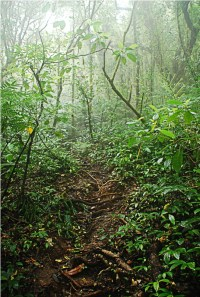 """About an hour and a half into our hike, we entered the """"mossy forest""""."""