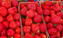 Strawberries are sold at PhP80 to PhP150 per kilo when they are already picked. The going rate if you opt to pick them yourself ranges from PhP200 to PhP350 per kilo, since you can choose the biggest and the best berries, as well as tour the farm.