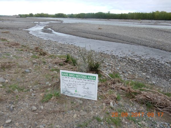 One or more 4WD vehicles drove past signs warning about rare nesting birds, and destroyed a wrybill nest, killing a recently hatched chick and breaking the other egg – thus killing the about to be hatched chick.