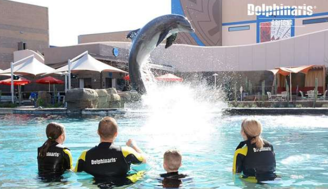 Three Dolphins Have Died Due To Infection At This Controversial Arizona Marine Park