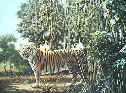 the hidden tiger