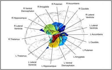 Appeared in Glahn et al. (2011). Biological Psychiatry. [http://dx.doi.org/10.1016/j.biopsych.2011.08.022]