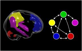 Appeared in Glahn et al. (2010). PNAS. [http://dx.doi.org/10.1073/pnas.0909969107]