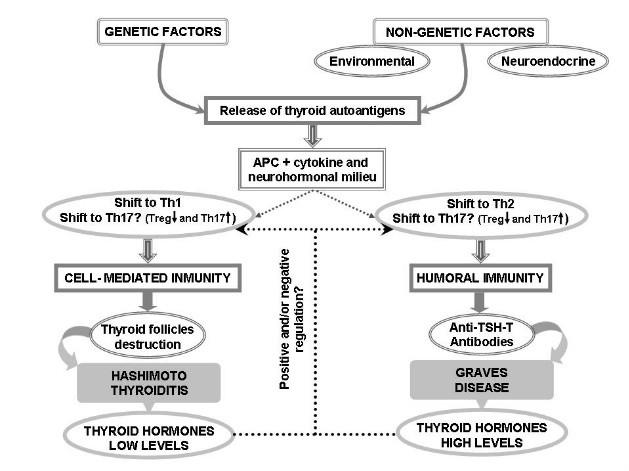 thyroid immune response and stress