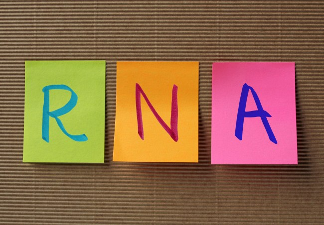 RNA (Ribonucleic acid) acronym on colorful sticky notes