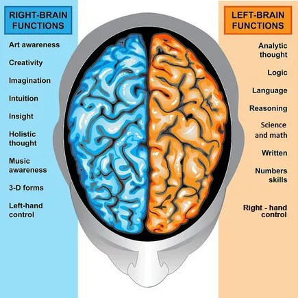 Left and Right Hemispheres