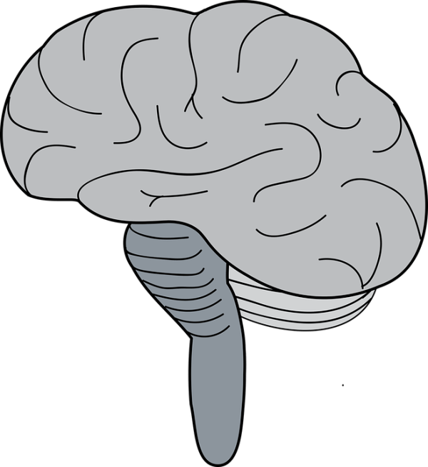 Brainstem | Definition, Location, Function, Anatomy & Diagram