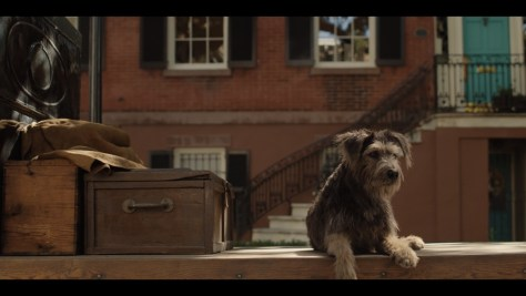 Tramp, Lady and the Tramp, Disney+, Taylor Made, The Walt Disney Company, Walt Disney Pictures, Justin Theroux