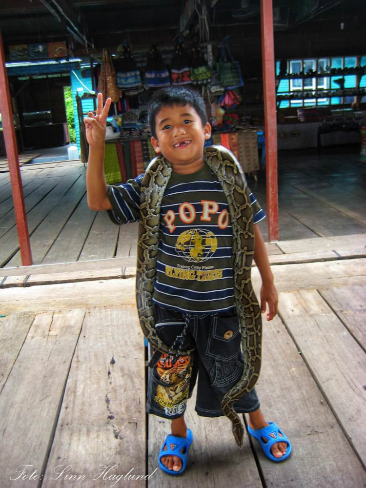 Cambodian boy showing off a snake and asking for a dollar