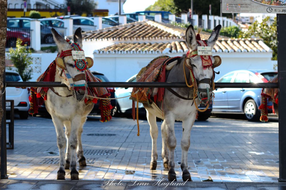 You should never ride a Donkey Taxi in Mijas