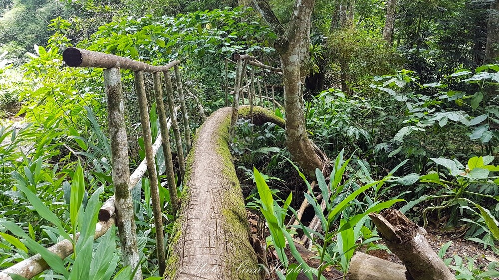 A tree is used as a bridge crossing the river along Batata hike