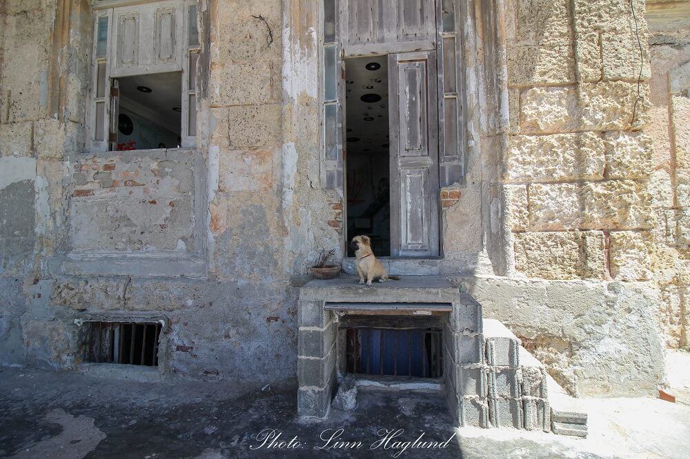 A guard dog is watching the house