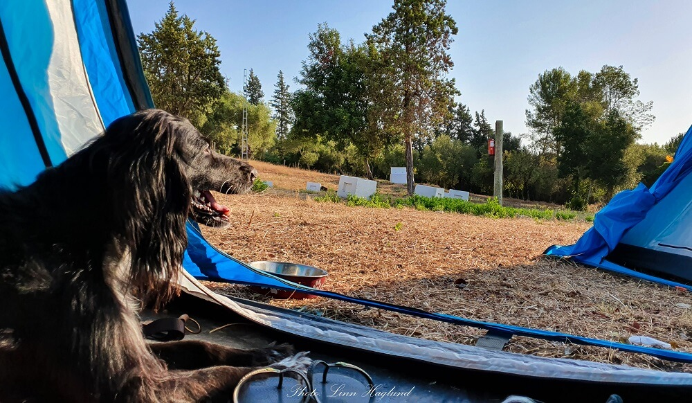How to find the best dog friendly tents