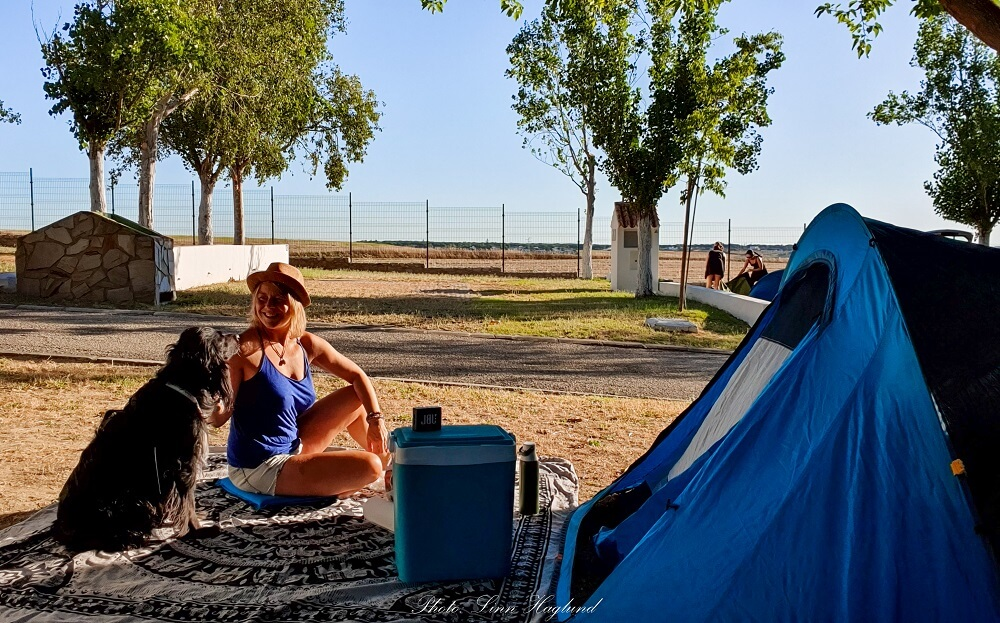 Guide to find the best tent for camping with dogs