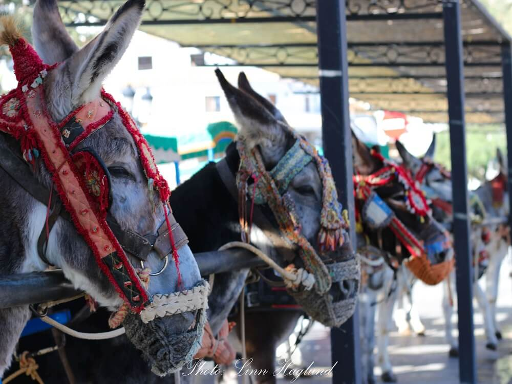 Don't ever take the Donkey Taxis in Mijas