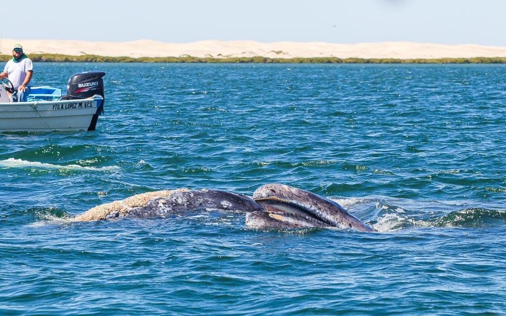 Whale watching in Baja Mexico