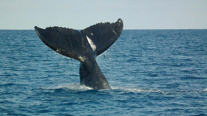 Brazil has some of the best whale watching in the world