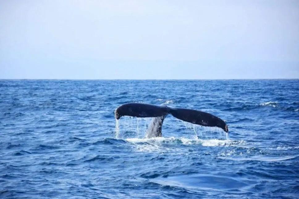 Whale watching in Mirissa, Sri Lanka