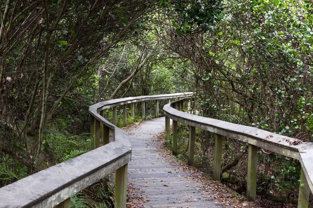 Shark Valley Trail
