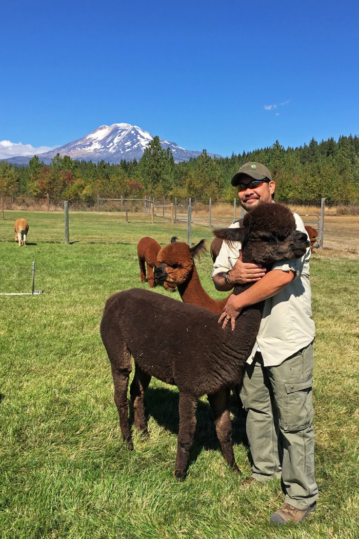 Michael hugging an alpaca at Meadowrock Alpacas Farm