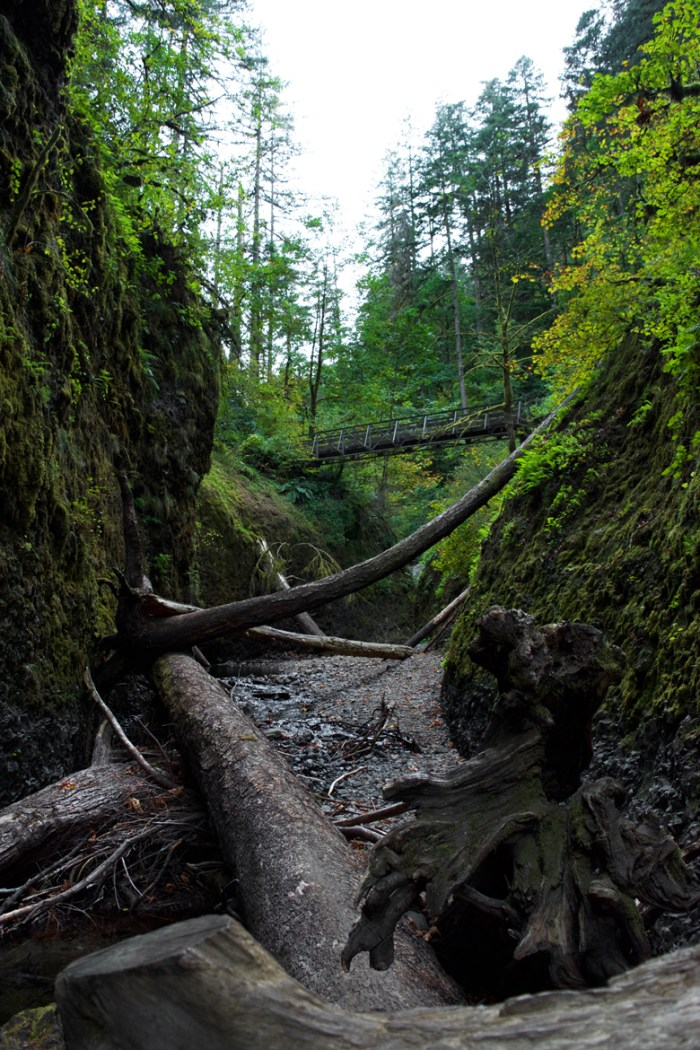 View from down in the narrow canyon of Oneonta Creek looking up at the trail bridge