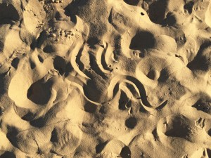 Curvy tracks of the sidewinder (snake) in dune sand