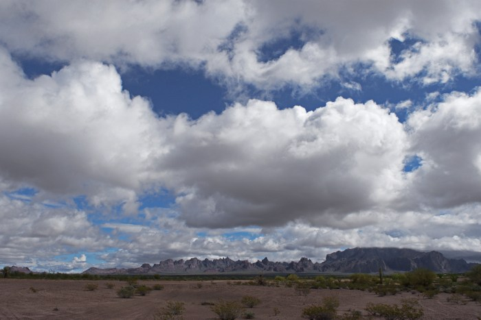 View of the expansive desert with the jagged Kofa Mountains in the distance and big, puffy clouds in the sky