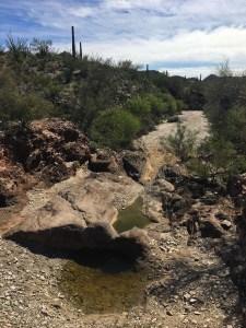 Desert wash with bedrock holding water called Red Tanks Tinaja