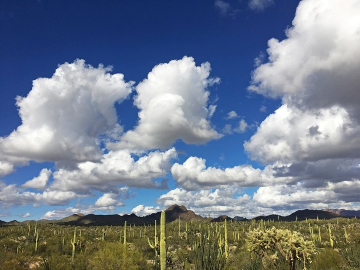 Sonoran desert landscape with saguaro cacti and bright blue sky with puffy clouds