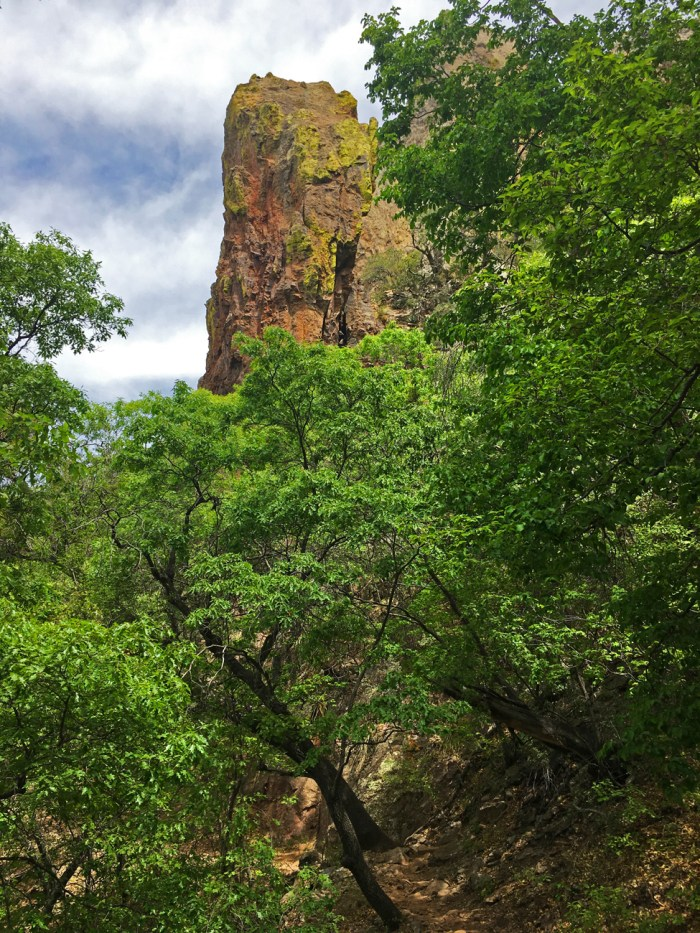 Bright green maples higher up on the Pinnacles Trail in Big Bend National Park