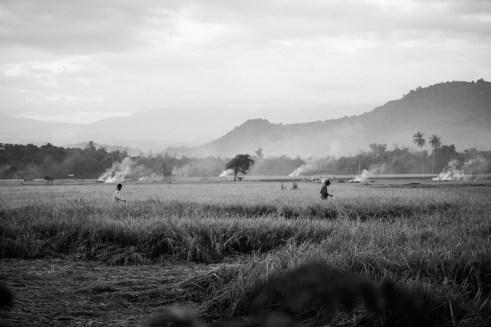 Sumbawa rice fields