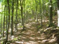 Sentiero carbonaie