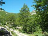 Zona Capanne di Badignana